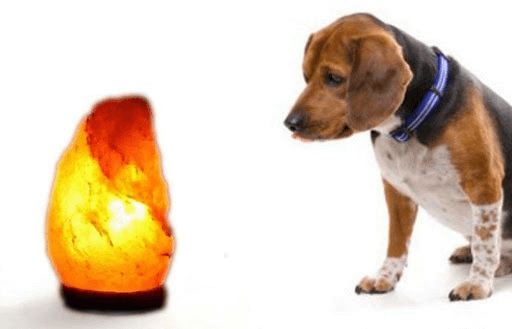 are salt lamps bad for dogs